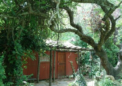 Berg_cottage_Clarens_vegetation